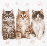 Lunch Napkins - 3 Kittens