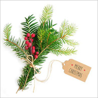Lunch napkins - Merry Christmas Pine