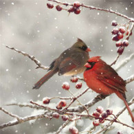 """Lunch napkin - Red Cardinal 6.5""""x6.5"""""""