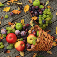"""Lunch napkins - grapes & apples 6.5""""x6.5"""""""