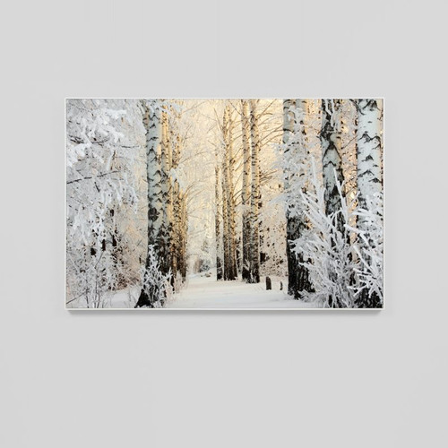 Canvas Print: Birch Forest In Winter