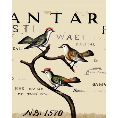 A250 Bird Botanical