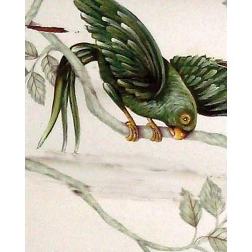 A84 Green Parrot