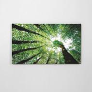 Canvas Print: Treetops