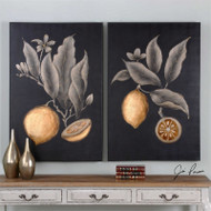 Citrus Study Set/2 - Hand Painted Artwork a Paintings by Uttermost
