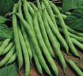 Pole Bean - Blue Lake FM1K Pole Bean Seed