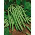 Pole Bean - Kentucky Wonder (Brown) Bean Seed