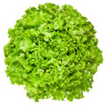 Green Ice Leaf Lettuce Heirloom Seed