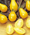 Yellow Pear Tomato Heirloom Seed