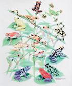 Froggies T-shirt - Imprinted Froggies