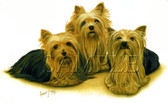 Three Yorkshire Terriers T-shirt - Three Yorkies