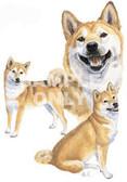 Shiba Inu Collage