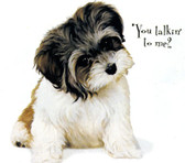YOUTH Shih Tzu You Talkin' to me? T-shirt - Imprinted Shih Tzu Puppy