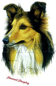 Shetland Sheepdog T-shirt - Imprinted Sheltie Head