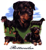 Rottweiler T-shirt - Imprinted Rottweiler Collage