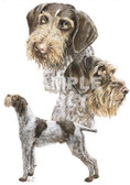 German Wirehaired Pointer T-shirt - Imprinted German Wirehairs Collage