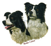 Border Collie T-shirt - Imprinted Two Border Collies