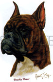 Brindle Boxer T-shirt - Imprinted Brindle Boxer Head