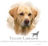 Yellow Labrador Retriever T-shirt - Imprinted Yellow Lab