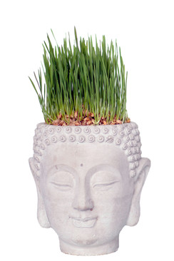 Cement Buddha Head Planter