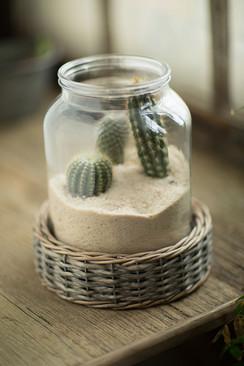 Glass and Wicker Terrarium - Cylinder