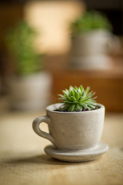 "Concrete ""Tea & Coffee"" Cup Planter"