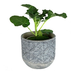 Aboriginal Medium Concrete Planter
