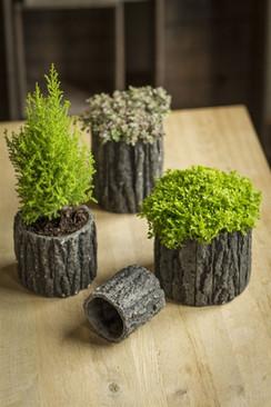 Concrete Pots with Bark-Like Detailing