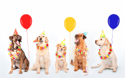 happy-birthday-dogs.jpg