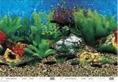 aquarium-cling-background-paper-example.jpg