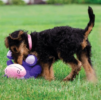 hero-innovations-in-play-with-dog-details-purple-cow.jpg