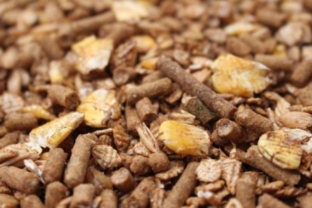 king-brand-textured-16-percent-goat-mix-close-up-of-feed-50-fd024005-187002-15.99-2020.jpg