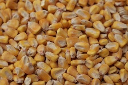 r-c-corn-king-brand-pic.jpg