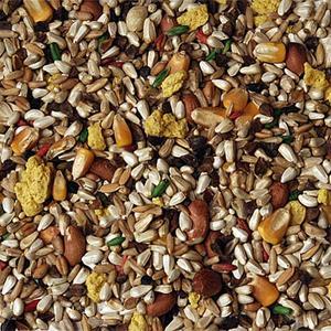 volkman-seed-factory-birds-delight-parrot-mix-safflower-closeup-seed.jpg