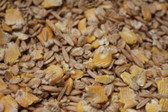 GRAIN, King COB Dry Mix (Corn Oats Barley) 50 lb. quality ingredients, grown and packaged in the USA