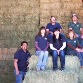 Alfalfa Hay, Baled, Supplement (available in store only)