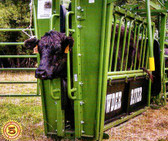 Powder River Livestock Handling Equipment XL Manual Squeeze Chute With Right Exit (MANY SIZES AVAILABLE IN-STORE ONLY, CONTACT STEVE AT L.A. HEARNE CO. KING CITY 831-385-4841; CONTACT TINA AT L.A. HEARNE CO. PRUNEDALE 831-663-1572)