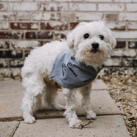 Personalized Pet Bandana Grey