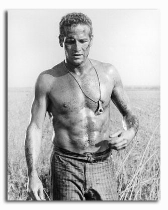 (SS2148120) Paul Newman  Cool Hand Luke Movie Photo