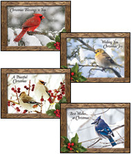 KJV Boxed Cards - Christmas, Feathered Friends