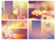 KJV Boxed Cards - Sympathy, Heavenly Sunlight
