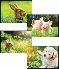 KJV Boxed Cards - Encouragement, Fur Baby Love