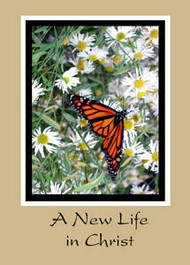 "A New Life in Christ - 5"" x 7"" KJV Greeting Card 78"