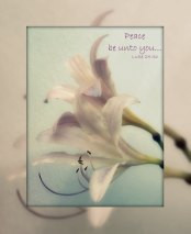 Peace Be Unto You - 5 Blank Notecards