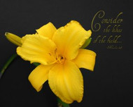 Consider the Lilies - 5 Blank Notecards