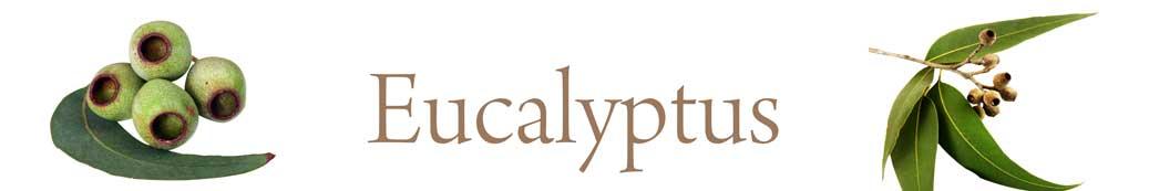 eucalyptus-01.jpg