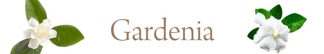 gardenia-01.jpg