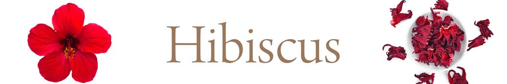 hibiscus-01.jpg
