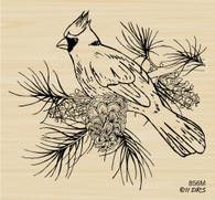 Cardinal on Branch - 856M
