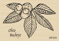 Ohio Buckeye - 225F